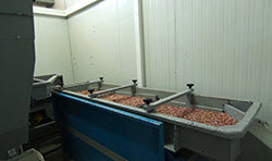 BIONOT PEANUTS CRACKING MACHINE AF1000 SIEVING UNIT