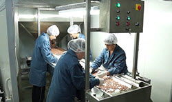 BIONOT PEANUTS CRACKING MACHINE AF1000 SORTING UNIT