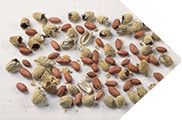 PHASE2 PEANUTS ARROW