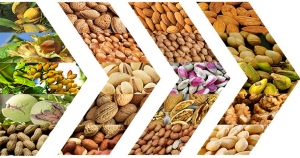 2018/2019 World nut production and forecast